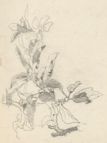 Étude de motifs floraux