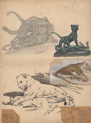 Ensemble de 18 feuilles d'études : Tigres dans l'arène, Fauves, Anatomies, Vaches, Lièvres, Cochons