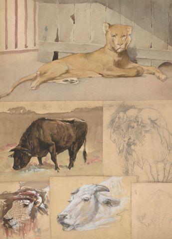 Ensemble de 6 feuilles d'études d'animaux dont : Lionne, vaches, taureau, arbre