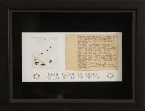 Graines ayant volé dans l'espace entre le 16/04/1989 et le 26/05/1991