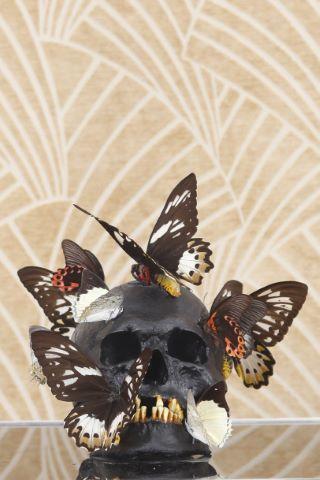 Tête aux papillons - vanité noire