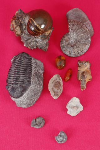 Ensemble de répliques de fossiles :